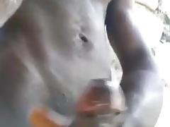 African cumshot